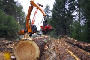 Timber industry gets lift from rising construction